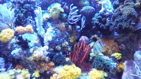 koralle stock video footage