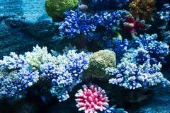 Koralle auf dem Meeresgrund Lizenzfreies Stockfoto