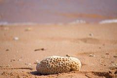 Koralle auf dem Strand Stockbild