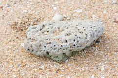 Koralle auf dem Strand Stockbilder
