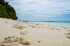 Koralle auf dem Strand, der Indische Ozean Stockfotografie
