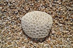 Koralle auf Sand Stockbilder