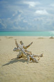 Koralle auf Strand Lizenzfreies Stockfoto