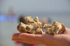 Koralle in der Hand Lizenzfreie Stockfotos