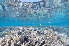 Koralle der Masse stockfotografie