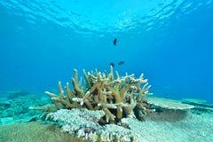 Koralle der Masse stockbild