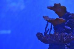 Koralle in Form einer Schicht auf moosbedeckten Steinen stockbild