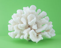 Koralle getrennt Stockfoto