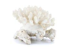 Koralle getrennt auf weißem Hintergrund lizenzfreies stockfoto