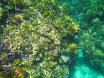 Koralle, Great Barrier Reef, Australien Stockbilder