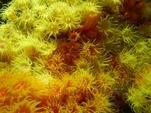 Koralle im Wasser Stockfoto