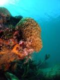 Koralle und die Oberfläche Lizenzfreies Stockfoto