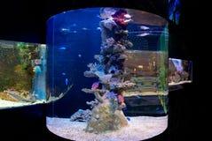 Koralle und Fische Stockbild