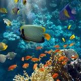 Koralle und Fische lizenzfreies stockbild