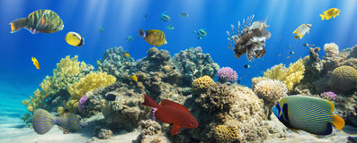 Koralle und Fische stockbilder