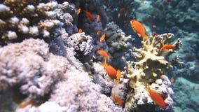 Koralle und Fische stock video