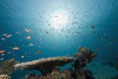 Koralle und Fische