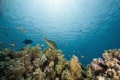 Koralle und Fische Stockfotos