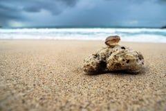 Koralle und Oberteil auf sandigem Strand lizenzfreie stockfotos