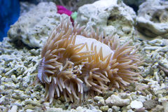 Koralle und Ozean Lizenzfreie Stockfotografie