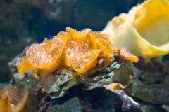Koralle und Ozean Stockfoto