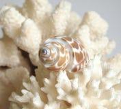Koralle und Shell Lizenzfreie Stockfotos