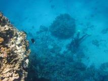 Koralle und Taucher Lizenzfreie Stockfotografie