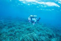 Koralle und Taucher Stockfotos