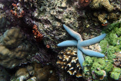 Korallen Stockbild
