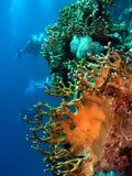 Korallen Stockfoto