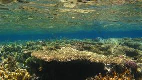 Korallen auf eine Riffoberseite Lizenzfreie Stockbilder