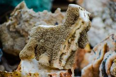 Korallen in der Welpenform stockbild