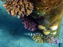Korallen, die auf Metallgefäß wachsen Stockfotos