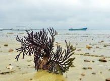 Korallen på den sandiga kusten royaltyfri foto