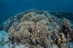 Korallen und bunte Fische Stockfoto