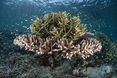 Korallen und kleine Fische Lizenzfreie Stockfotos