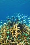 Korallen Unterwasser Stockfotos