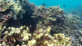 Korallen von Thailand stock footage