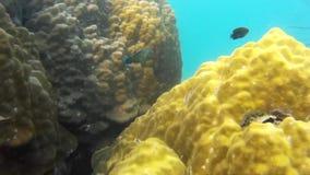 Korallen von Thailand stock video footage