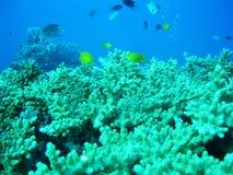 Korallenriff Stockfoto