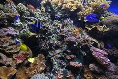 Korallenriff Lizenzfreies Stockbild