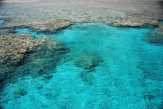 Korallenriff Stockbild