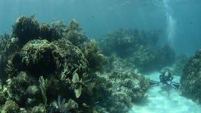 Korallenriff stock footage