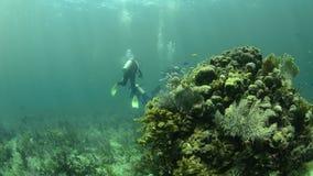 Korallenriff stock video