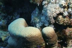 Korallenriff Stockfotografie