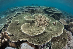 Korallenriff 1 Lizenzfreie Stockfotos