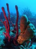 Korallenriff stockfotos