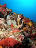 Korallenriff Lizenzfreie Stockfotos