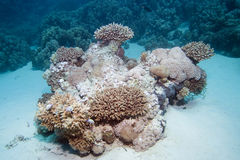 Korallenriff Lizenzfreies Stockfoto