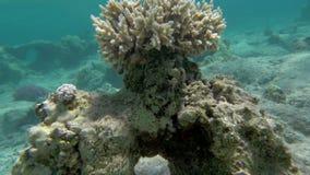 Korallenriff als Teil der schönen unterseeischen Welt stock footage